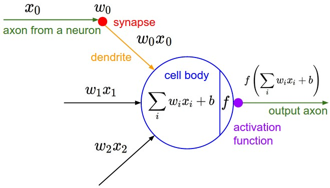 Exploring alternative neural computational models